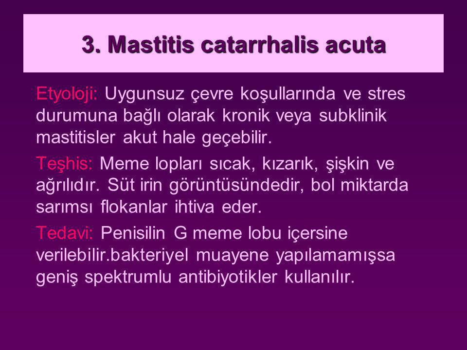 3. Mastitis catarrhalis acuta