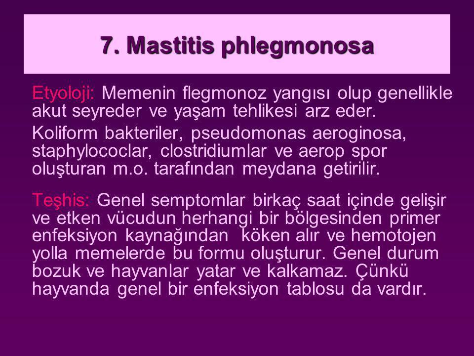 7. Mastitis phlegmonosa Etyoloji: Memenin flegmonoz yangısı olup genellikle akut seyreder ve yaşam tehlikesi arz eder.
