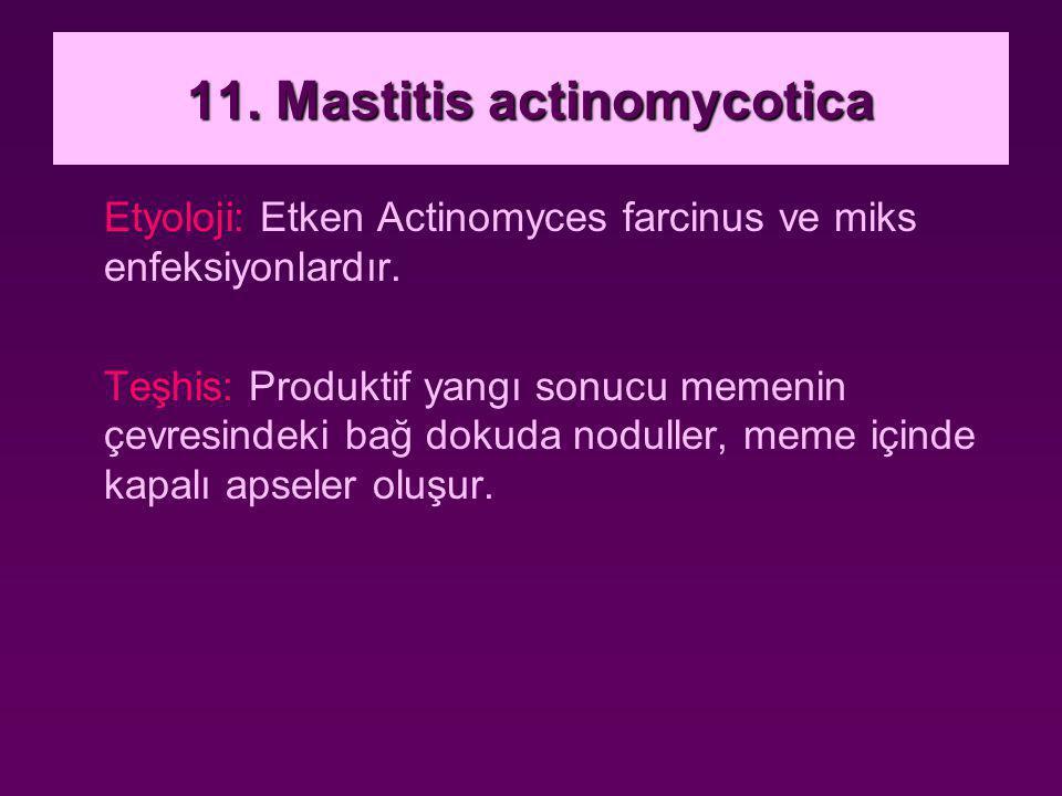 11. Mastitis actinomycotica