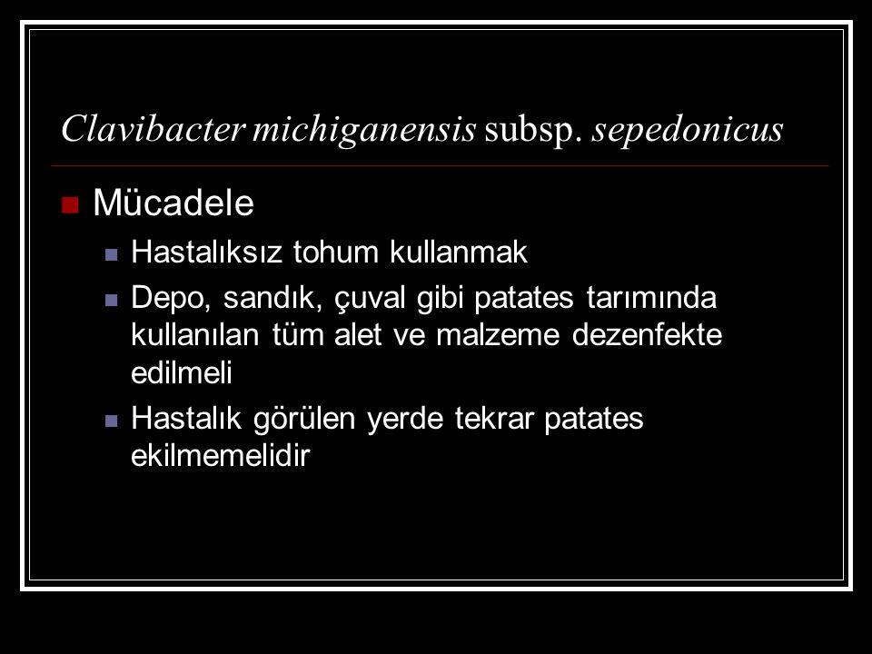 Clavibacter michiganensis subsp. sepedonicus
