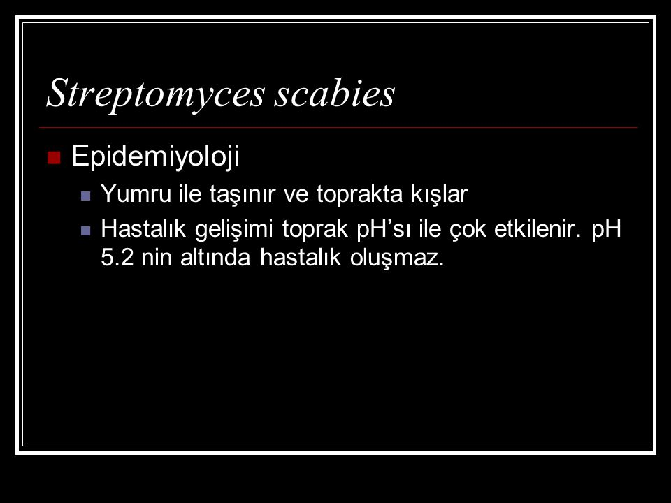 Streptomyces scabies Epidemiyoloji