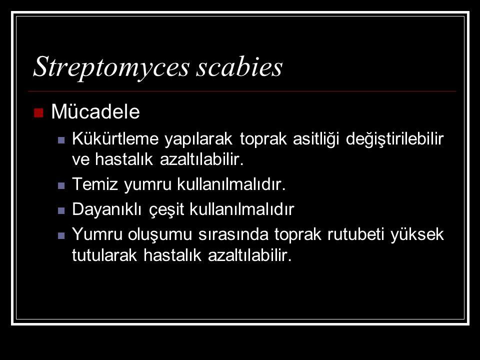 Streptomyces scabies Mücadele