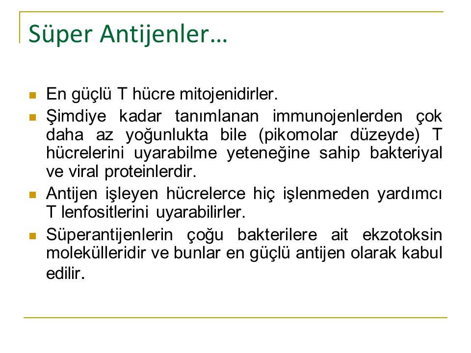 Süper Antijenler… En güçlü T hücre mitojenidirler.