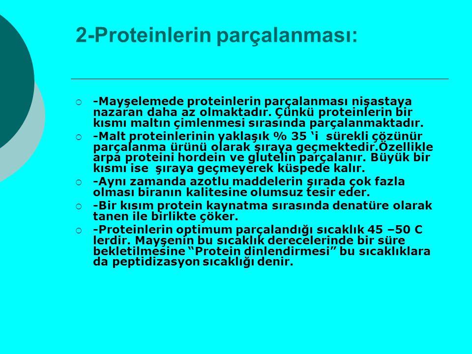 2-Proteinlerin parçalanması: