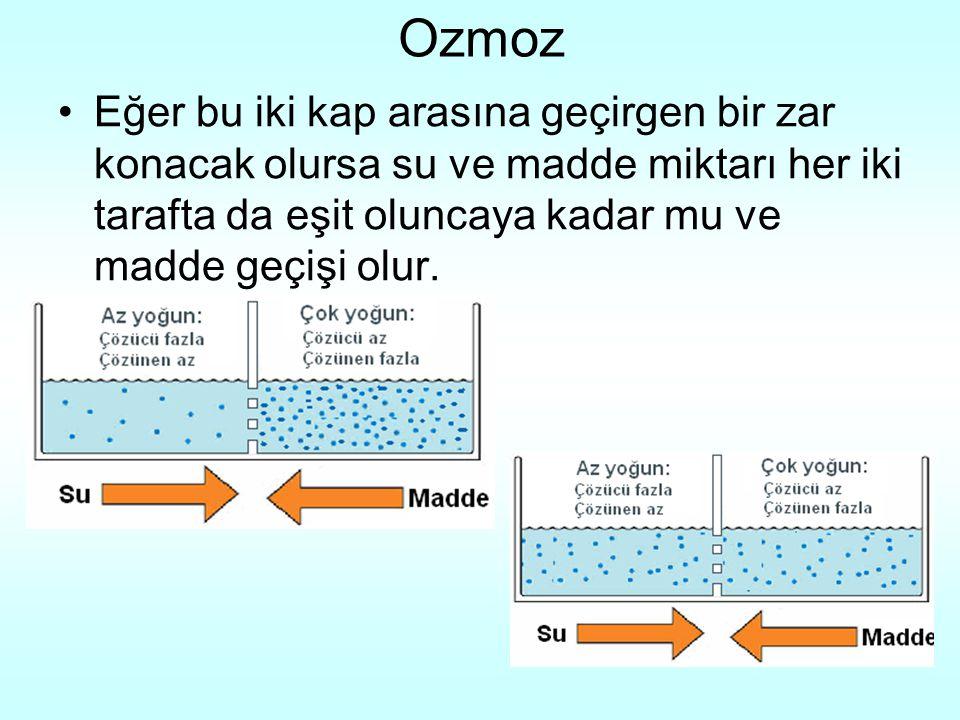 Ozmoz Eğer bu iki kap arasına geçirgen bir zar konacak olursa su ve madde miktarı her iki tarafta da eşit oluncaya kadar mu ve madde geçişi olur.