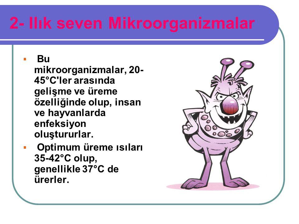 2- Ilık seven Mikroorganizmalar