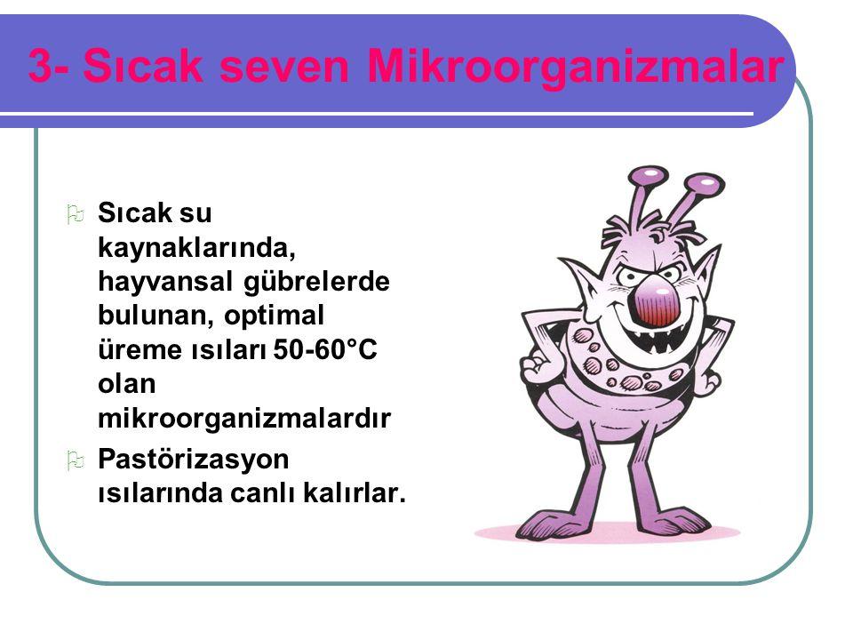 3- Sıcak seven Mikroorganizmalar