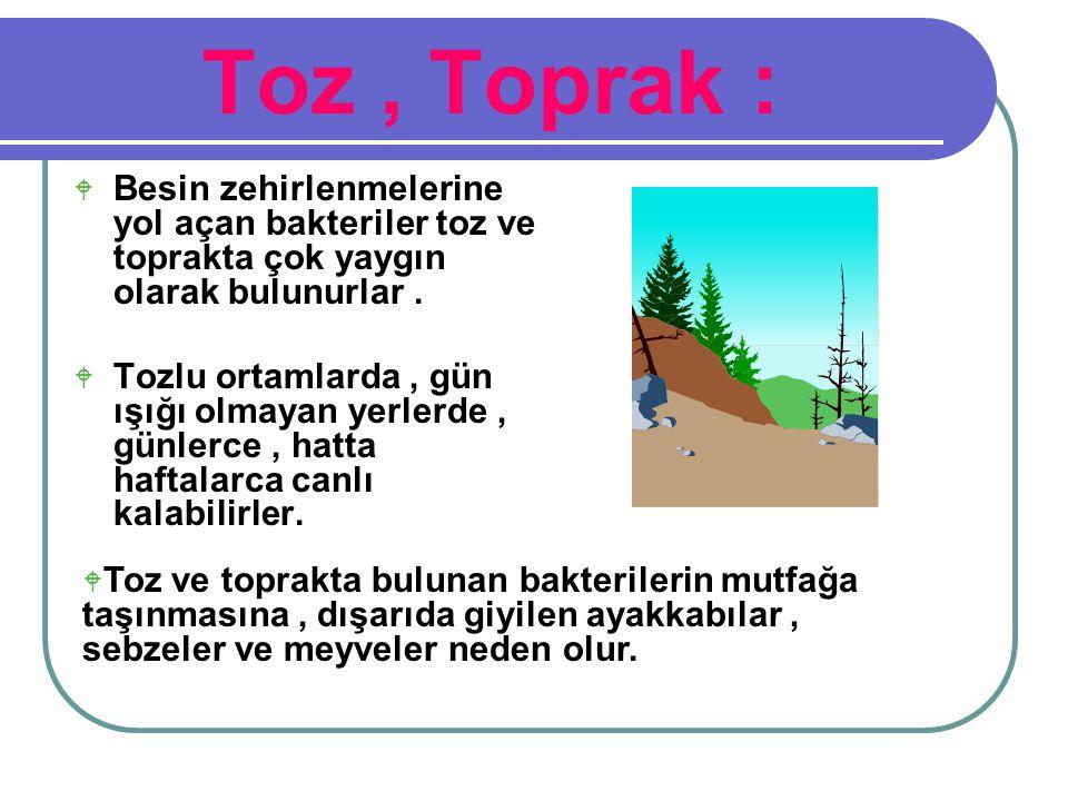 Toz , Toprak : Besin zehirlenmelerine yol açan bakteriler toz ve toprakta çok yaygın olarak bulunurlar .