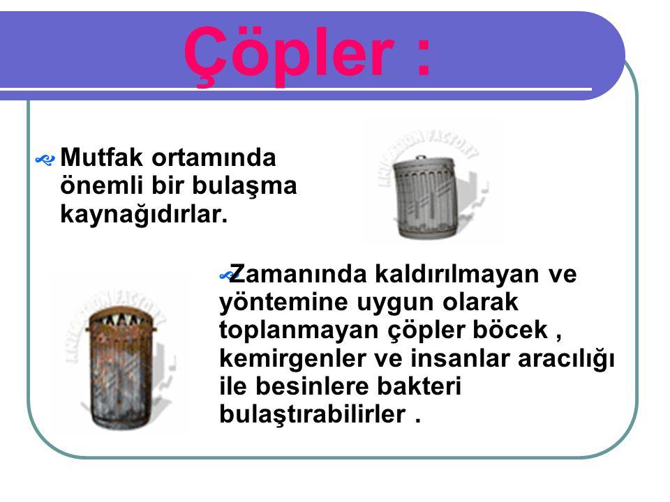 Çöpler : Mutfak ortamında önemli bir bulaşma kaynağıdırlar.
