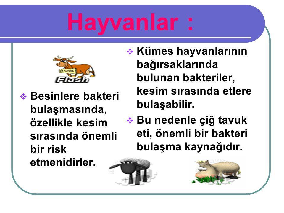 Hayvanlar : Kümes hayvanlarının bağırsaklarında bulunan bakteriler, kesim sırasında etlere bulaşabilir.