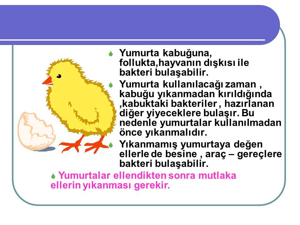 Yumurta kabuğuna, follukta,hayvanın dışkısı ile bakteri bulaşabilir.