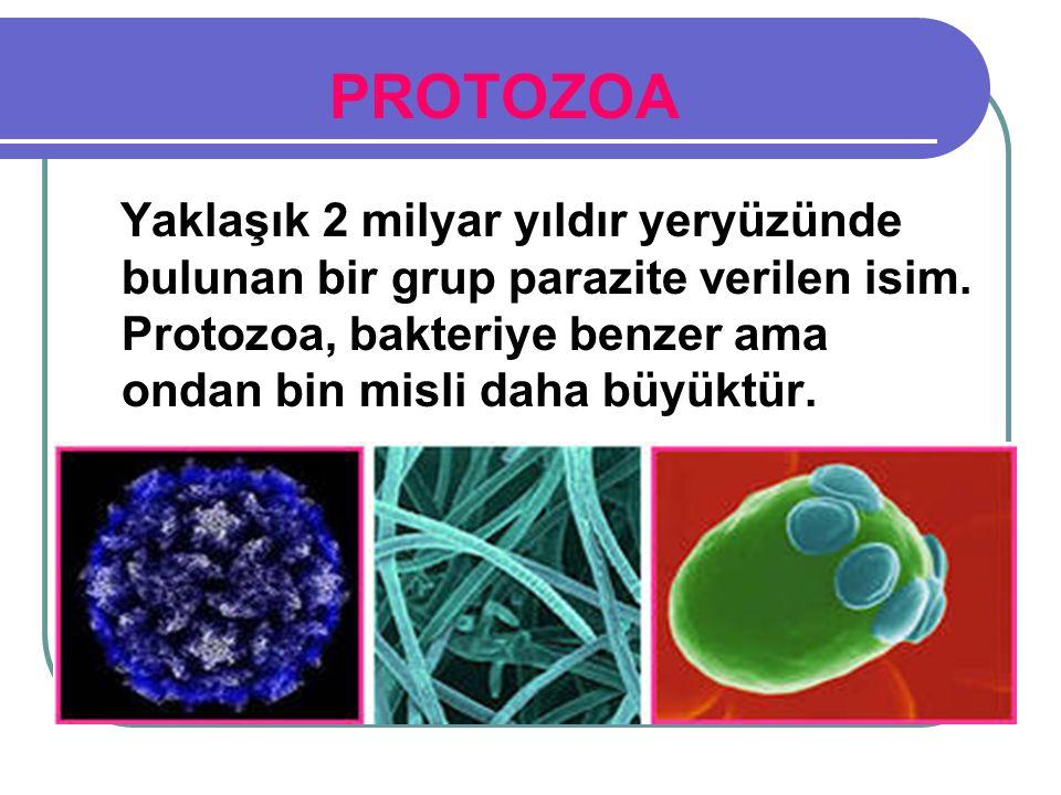 PROTOZOA Yaklaşık 2 milyar yıldır yeryüzünde bulunan bir grup parazite verilen isim.