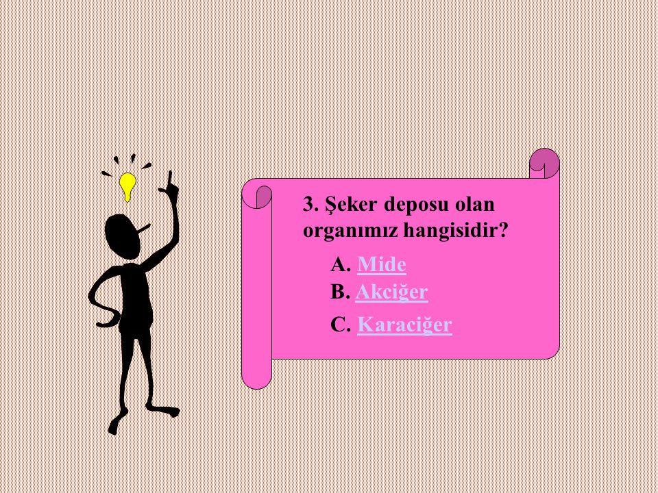 3. Şeker deposu olan organımız hangisidir