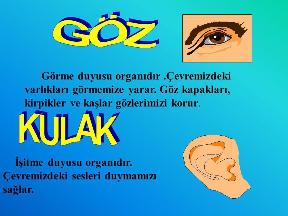GÖZ Görme duyusu organıdır .Çevremizdeki varlıkları görmemize yarar. Göz kapakları, kirpikler ve kaşlar gözlerimizi korur.