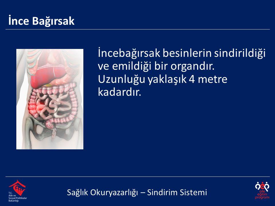 İncebağırsak besinlerin sindirildiği ve emildiği bir organdır.