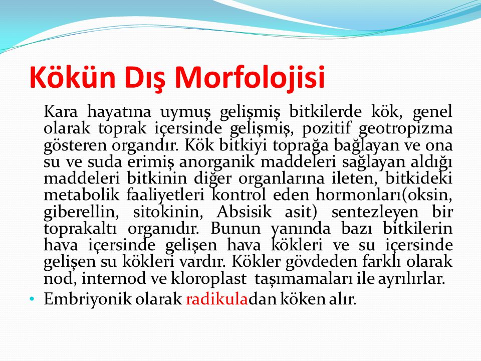 Kökün Dış Morfolojisi