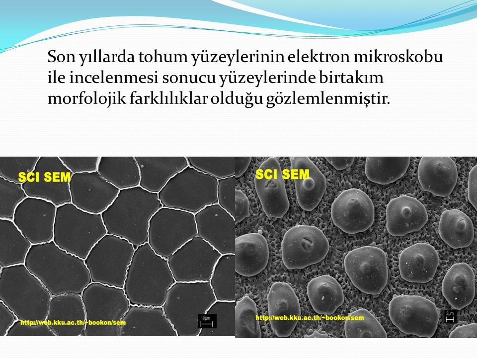 Son yıllarda tohum yüzeylerinin elektron mikroskobu ile incelenmesi sonucu yüzeylerinde birtakım morfolojik farklılıklar olduğu gözlemlenmiştir.