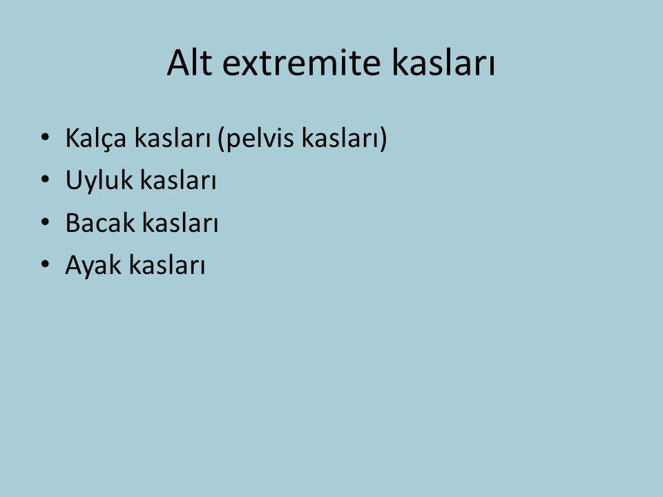 Alt extremite kasları Kalça kasları (pelvis kasları) Uyluk kasları