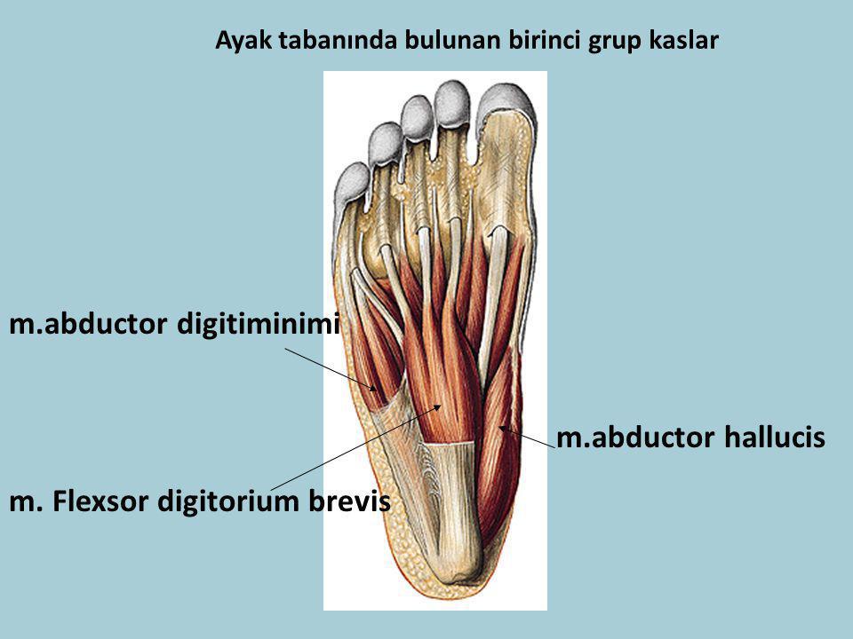 Ayak tabanında bulunan birinci grup kaslar