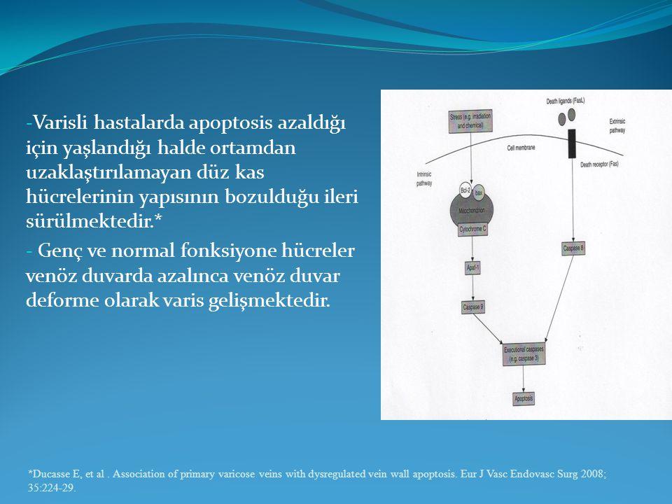 Varisli hastalarda apoptosis azaldığı için yaşlandığı halde ortamdan uzaklaştırılamayan düz kas hücrelerinin yapısının bozulduğu ileri sürülmektedir.*