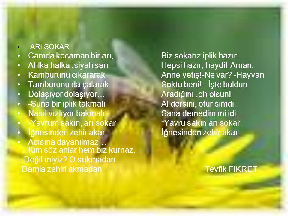 Camda kocaman bir arı, Biz sokarız iplik hazır…