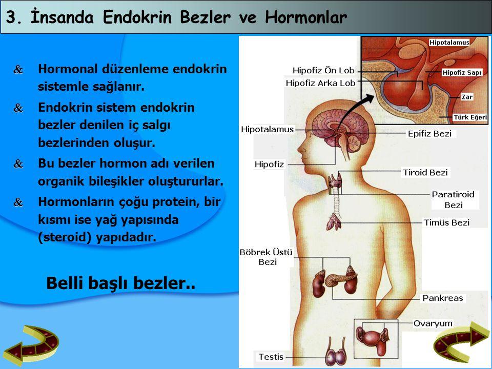 3. İnsanda Endokrin Bezler ve Hormonlar