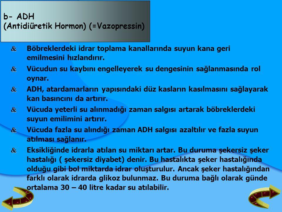 (Antidiüretik Hormon) (=Vazopressin)