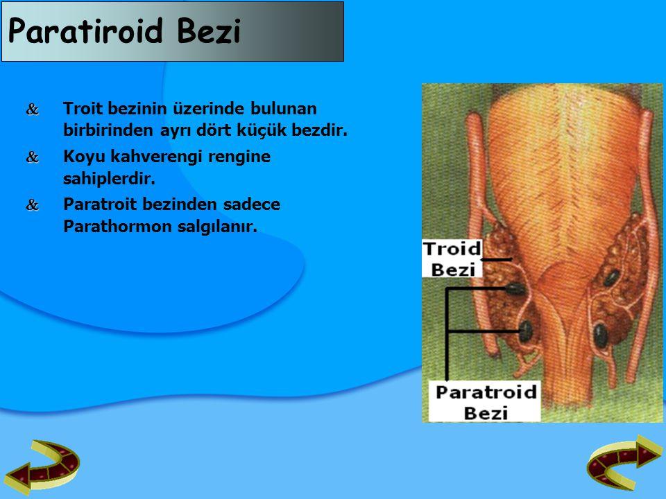 Paratiroid Bezi  Troit bezinin üzerinde bulunan birbirinden ayrı dört küçük bezdir.  Koyu kahverengi rengine sahiplerdir.