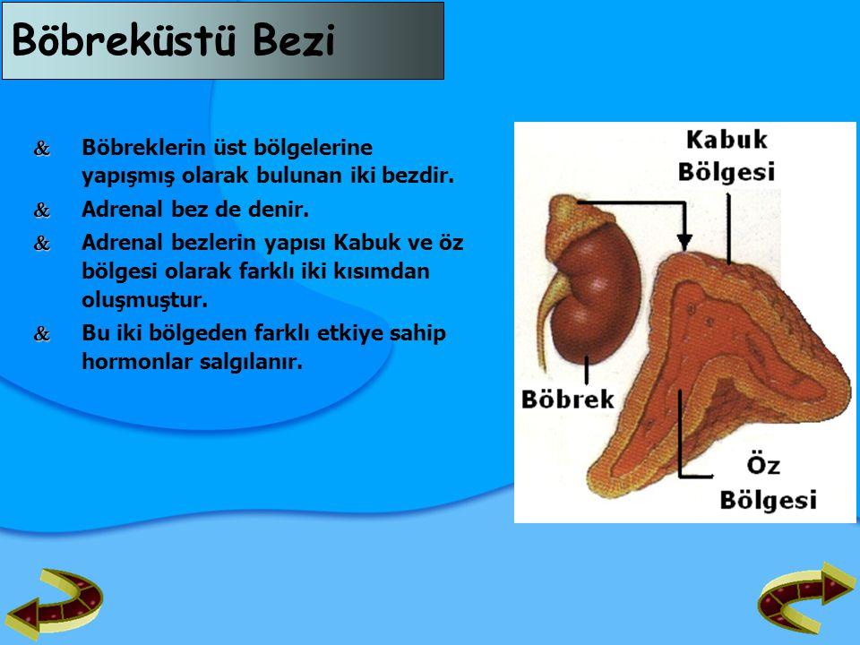 Böbreküstü Bezi  Böbreklerin üst bölgelerine yapışmış olarak bulunan iki bezdir.  Adrenal bez de denir.