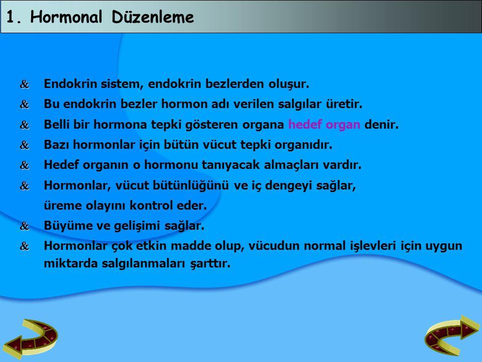 1. Hormonal Düzenleme  Endokrin sistem, endokrin bezlerden oluşur.