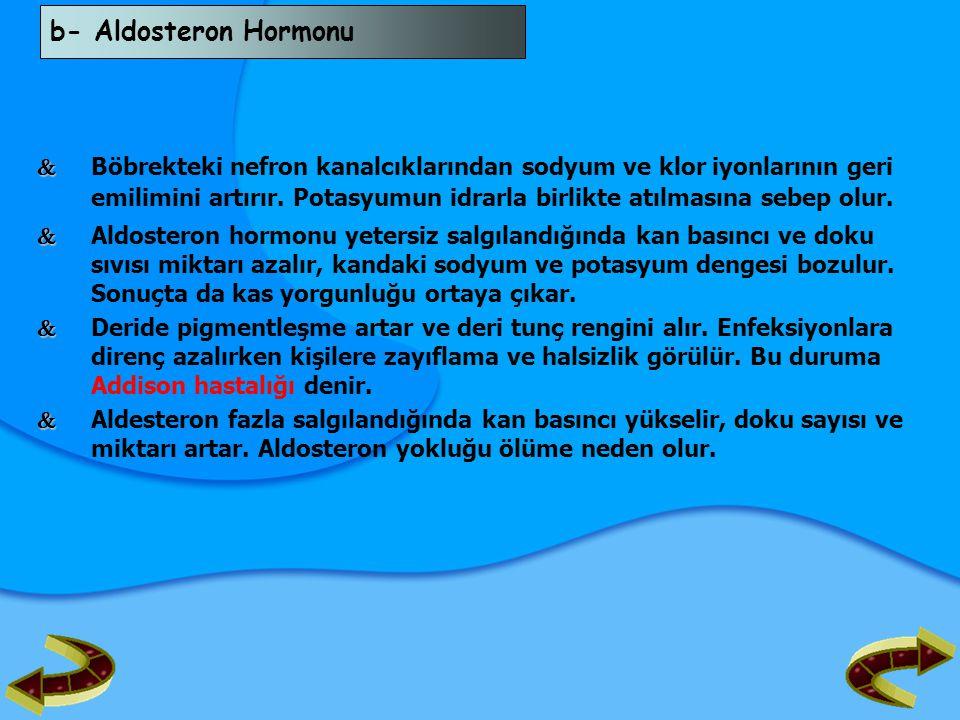 b- Aldosteron Hormonu