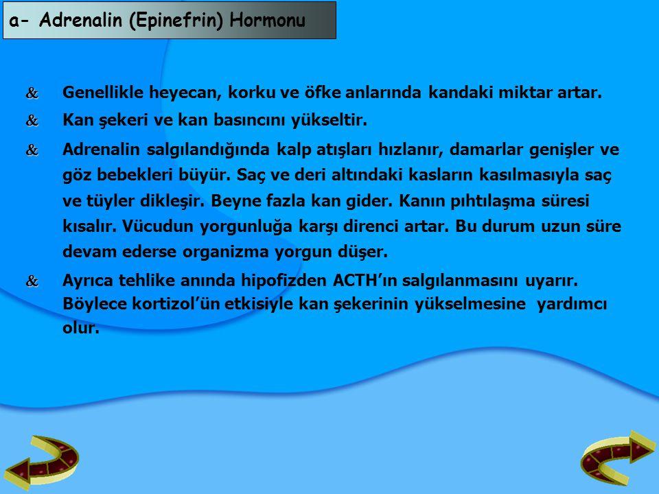 a- Adrenalin (Epinefrin) Hormonu