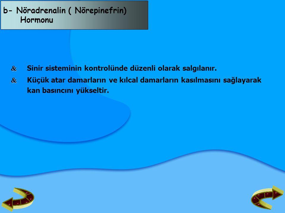b- Nöradrenalin ( Nörepinefrin) Hormonu