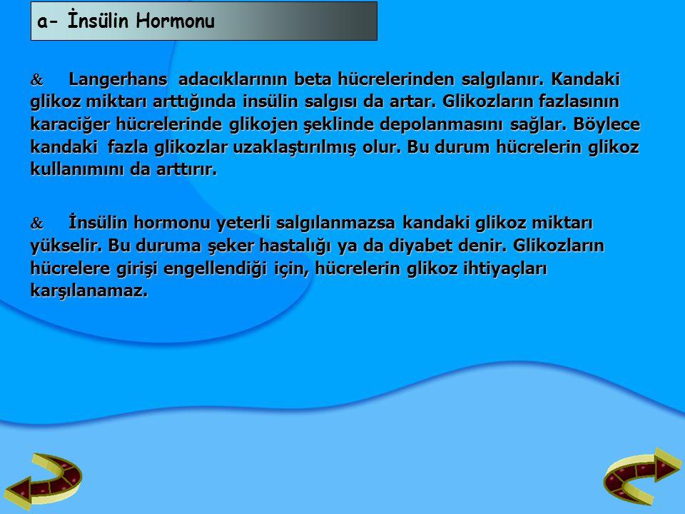 a- İnsülin Hormonu