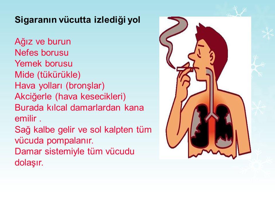 Sigaranın vücutta izlediği yol