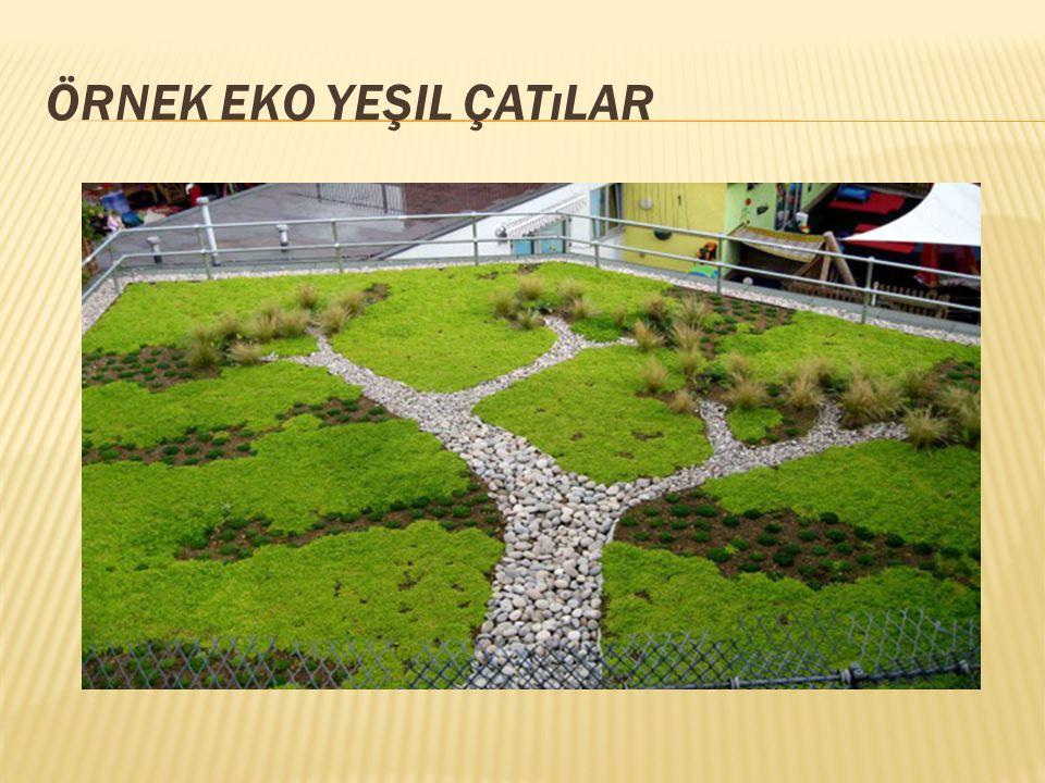 Örnek Eko yeşil çatılar