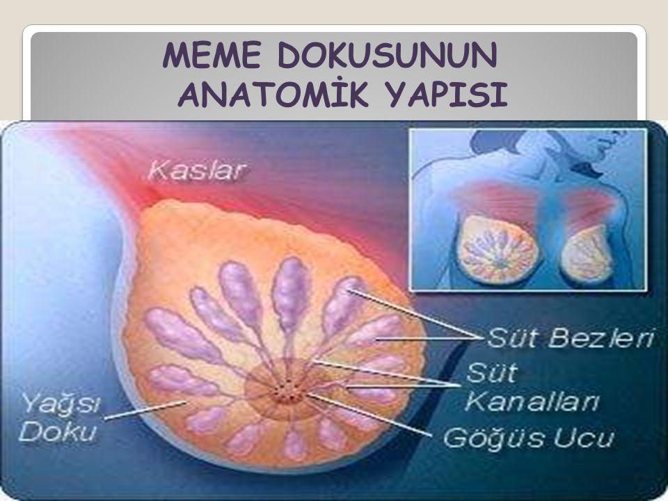 MEME DOKUSUNUN ANATOMİK YAPISI