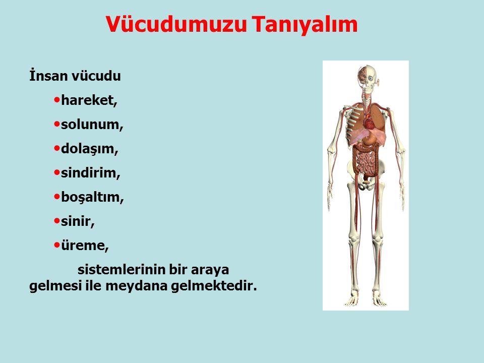 Vücudumuzu Tanıyalım İnsan vücudu hareket, solunum, dolaşım, sindirim,