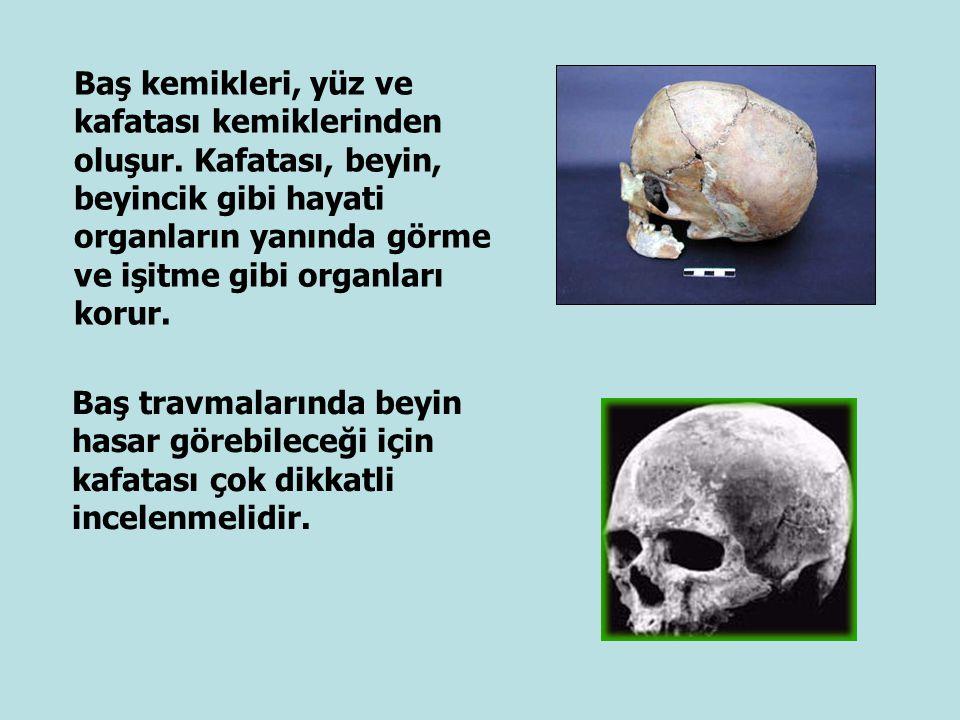 Baş kemikleri, yüz ve kafatası kemiklerinden oluşur