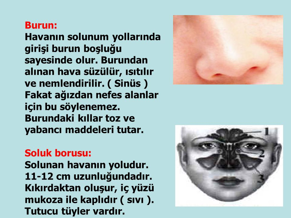 Burun:
