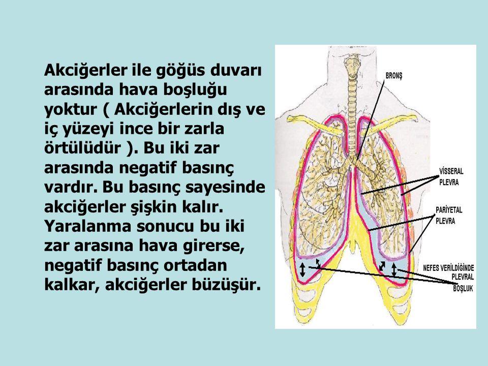 Akciğerler ile göğüs duvarı arasında hava boşluğu yoktur ( Akciğerlerin dış ve iç yüzeyi ince bir zarla örtülüdür ).