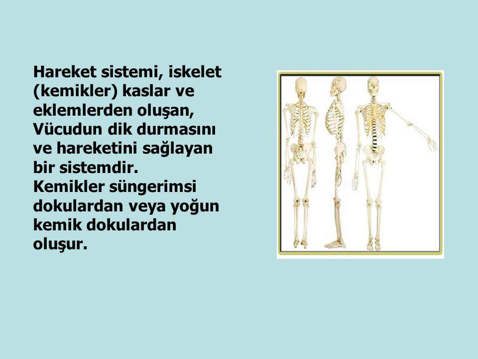 Hareket sistemi, iskelet (kemikler) kaslar ve eklemlerden oluşan,