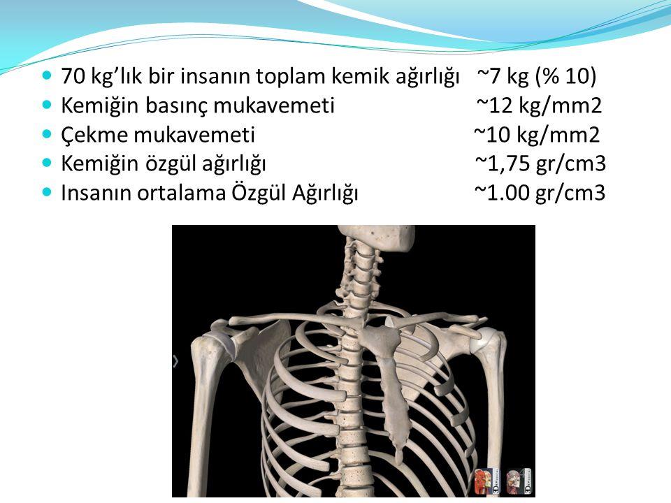 70 kg'lık bir insanın toplam kemik ağırlığı ~7 kg (% 10)