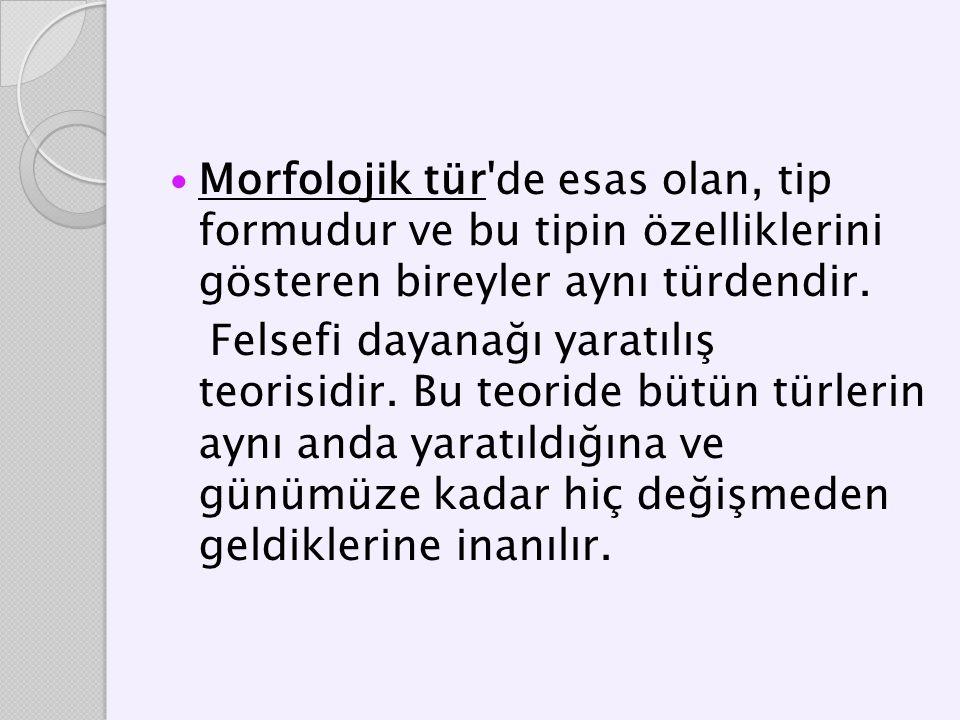 Morfolojik tür de esas olan, tip formudur ve bu tipin özelliklerini gösteren bireyler aynı türdendir.