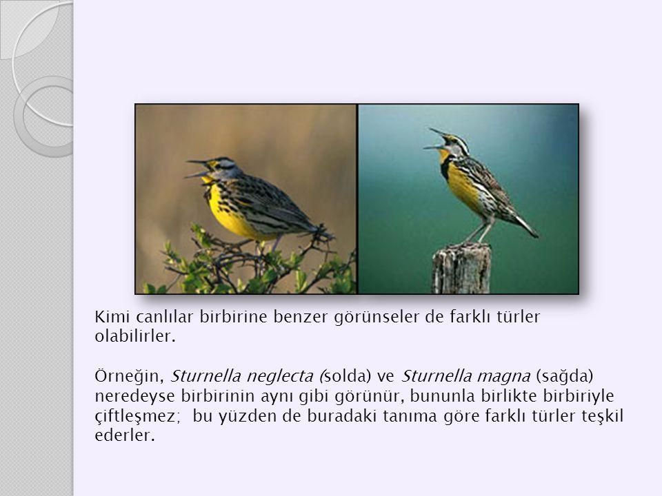 Kimi canlılar birbirine benzer görünseler de farklı türler olabilirler.