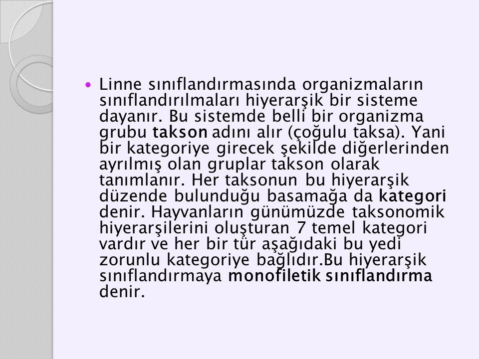 Linne sınıflandırmasında organizmaların sınıflandırılmaları hiyerarşik bir sisteme dayanır.