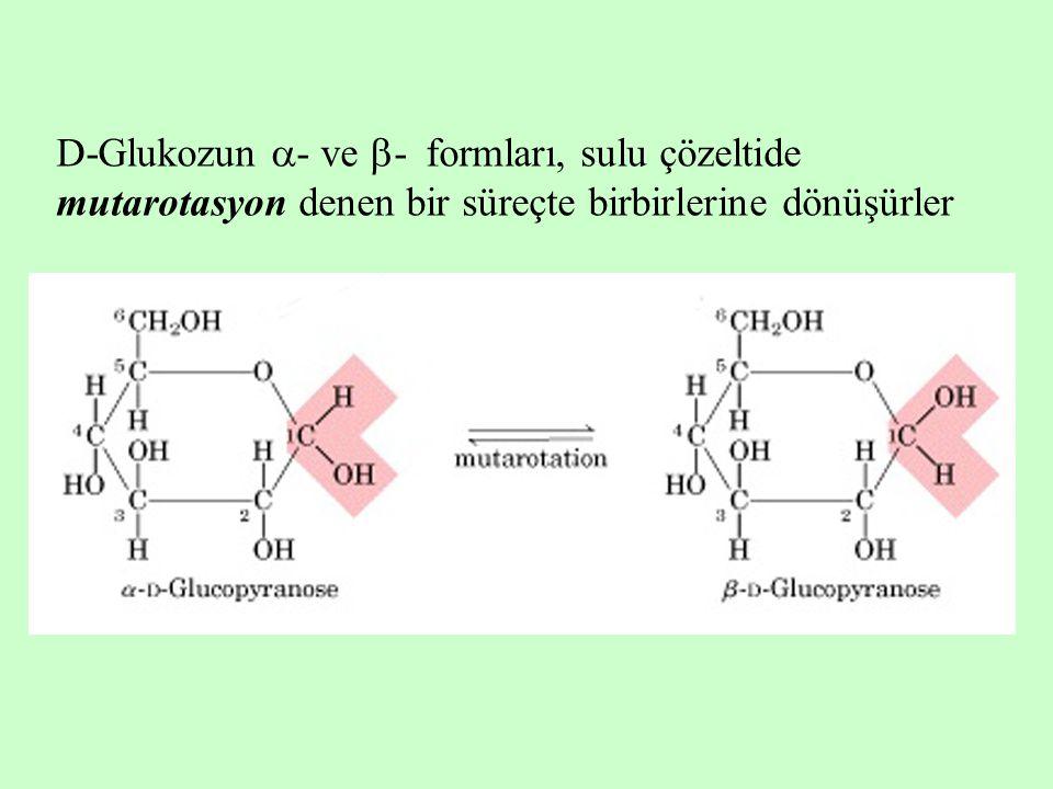D-Glukozun - ve - formları, sulu çözeltide mutarotasyon denen bir süreçte birbirlerine dönüşürler