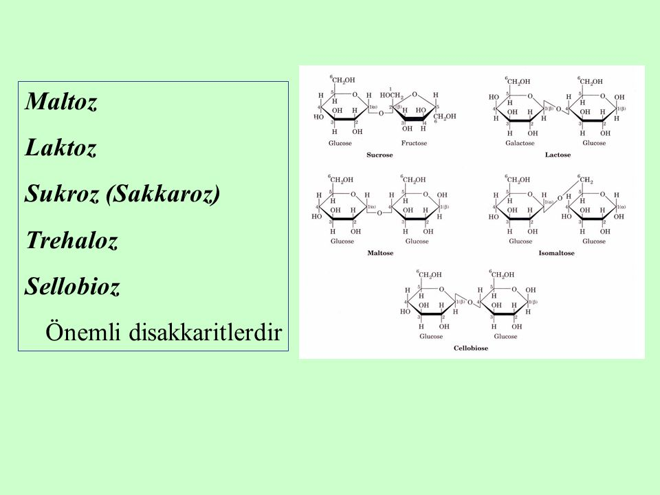 Maltoz Laktoz Sukroz (Sakkaroz) Trehaloz Sellobioz Önemli disakkaritlerdir