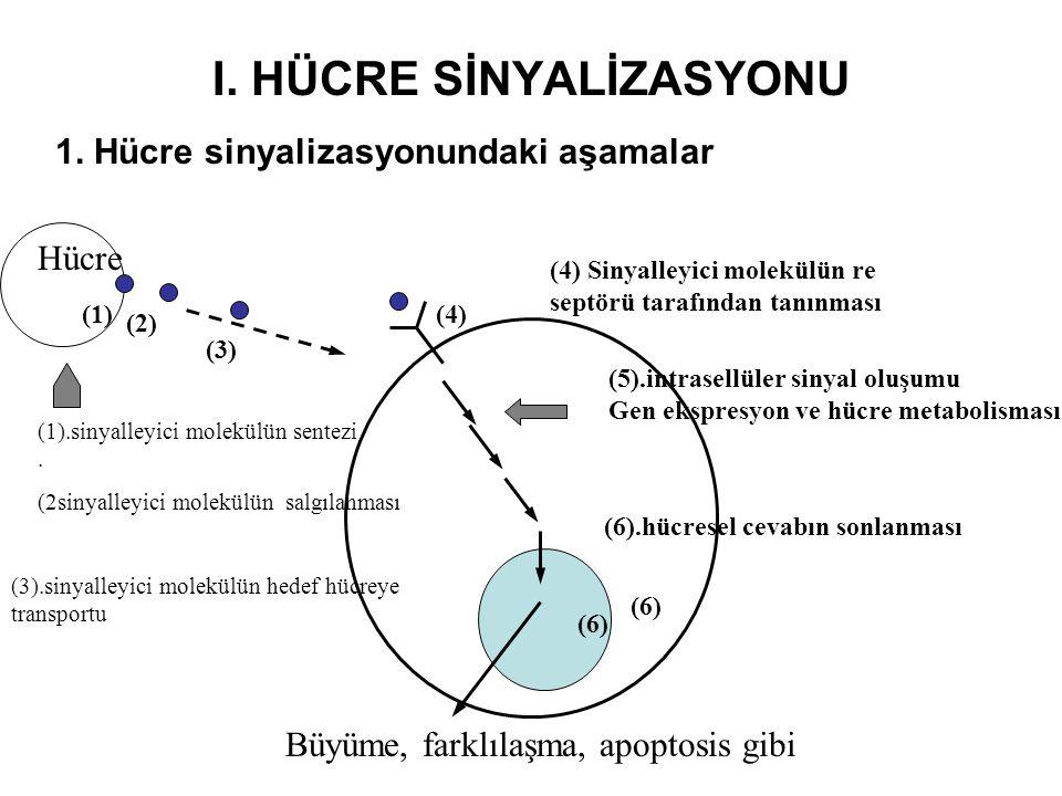 I. HÜCRE SİNYALİZASYONU