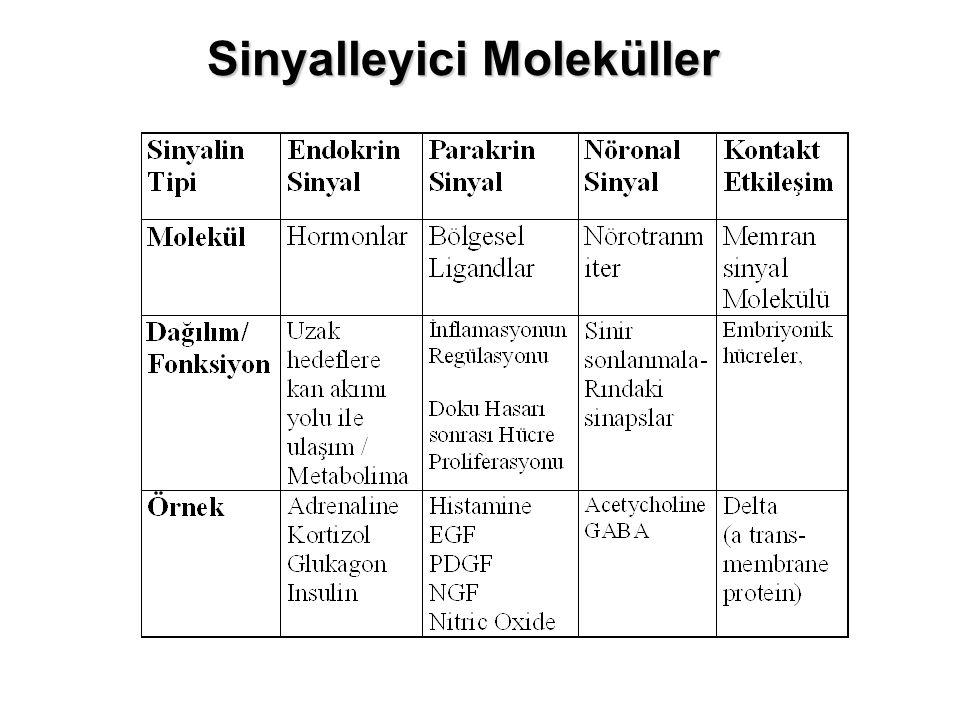 Sinyalleyici Moleküller